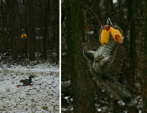 How To Make Squirrel Bungee Feeder